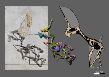 Decomisaron un fósil de dinosaurio volador en excelente estado de conservación tras redada en Brasil