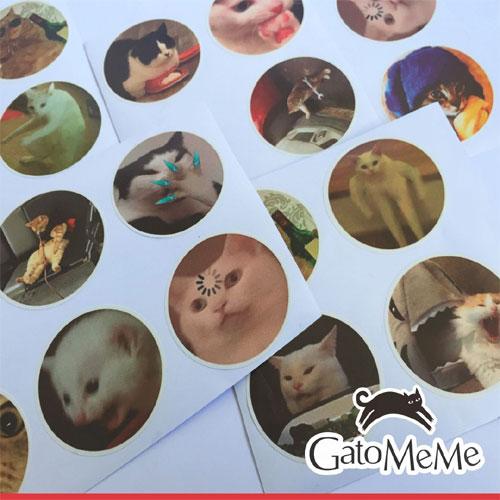 Vino Gato comenzará a vender botellas con memes tras éxito viral gatuno